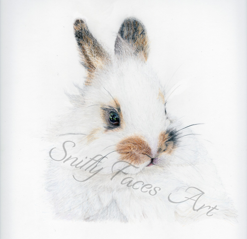 'Little Bunny' Original Artwork Sniffy Faces Art Shop