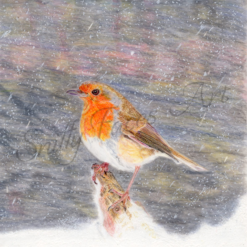 'Winter Robin' Original Artwork Sniffy Faces Art Shop