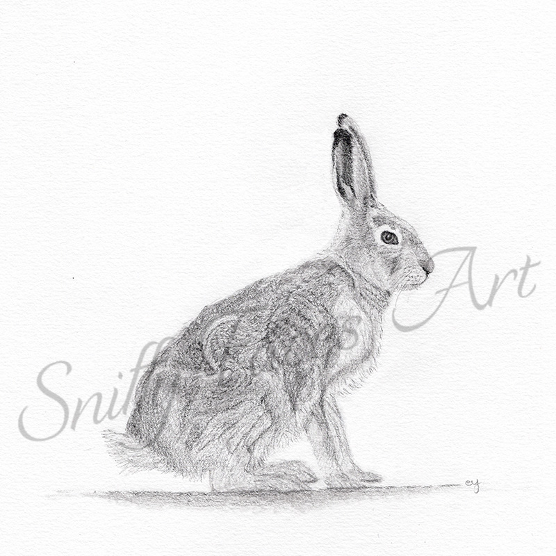 'Hare' Card Sniffy Faces Art Shop