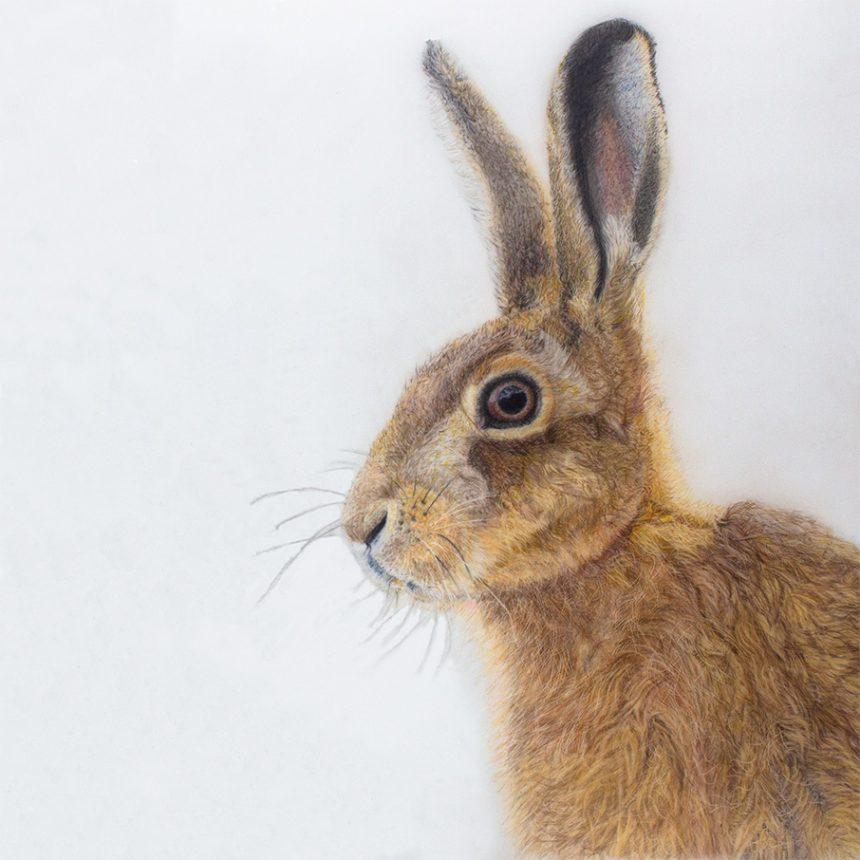'Jill hare' Card